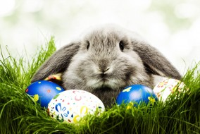 Happy-Easter-Images-2016-1